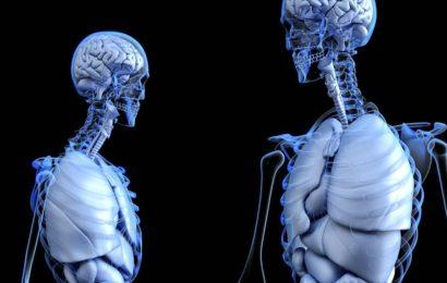 Los nuevos robots diminutos capaces de moverse en el interior del cuerpo humano