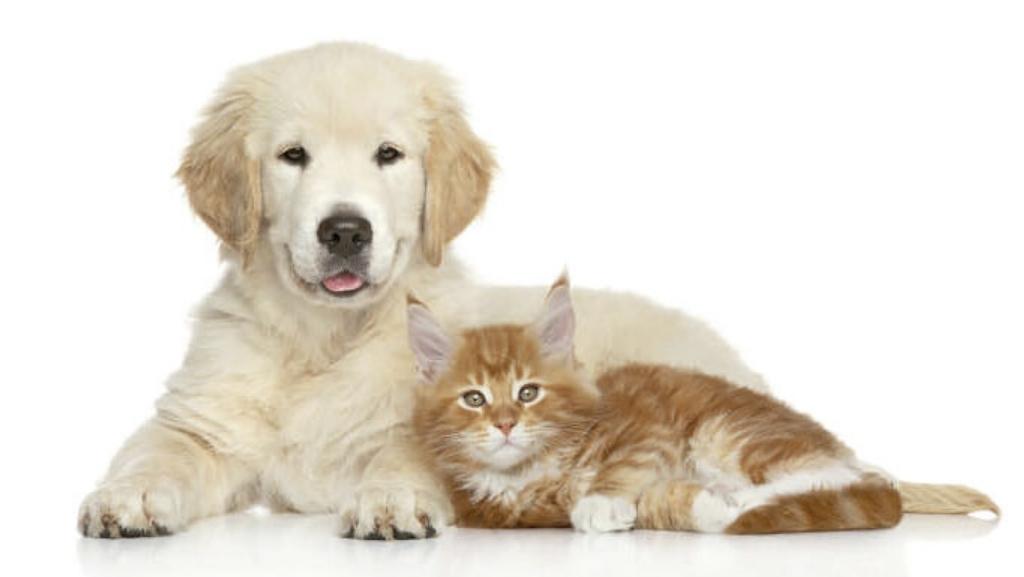Los perros y gatos solo transmiten amor y cariño