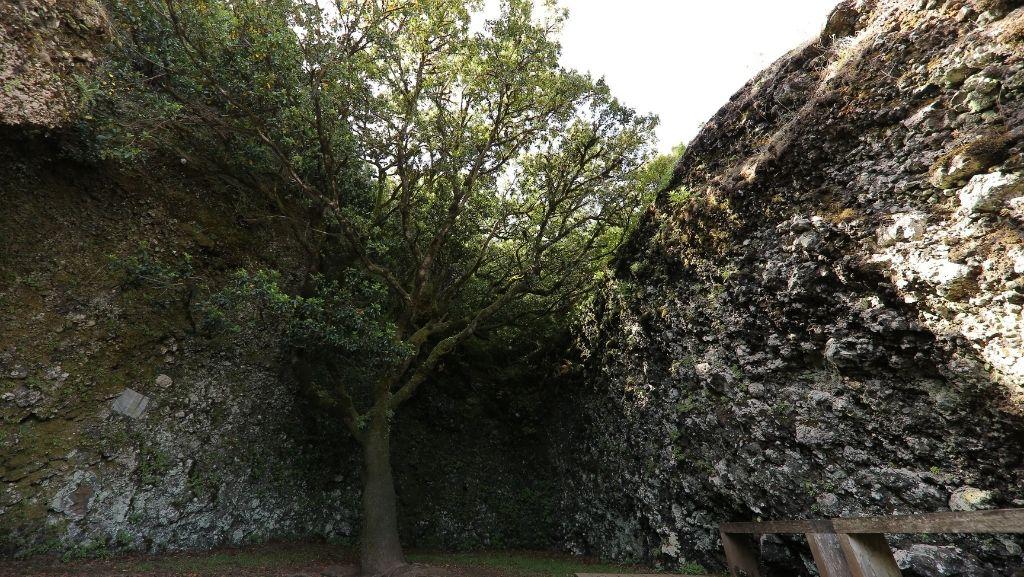 La Leyenda del Árbol Garoé