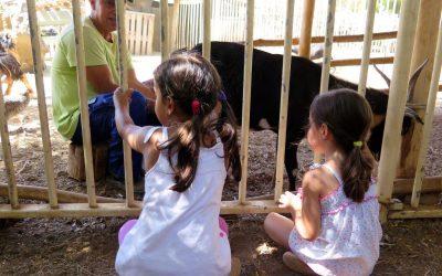 Una granja escuela: El Carretón