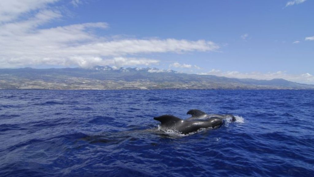 Centro de interpretación de cetáceos
