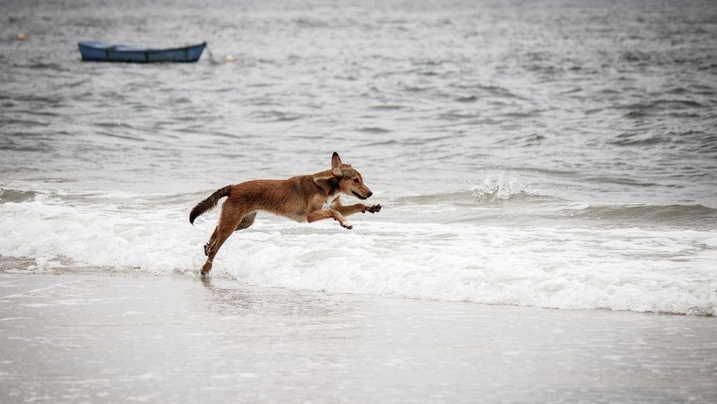 A la playa con mi perro