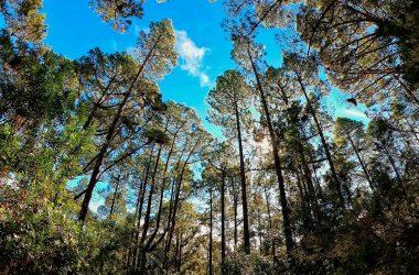 Recogen firmas para que  Canarias tenga una Ley de Protección  del arbolado urbano