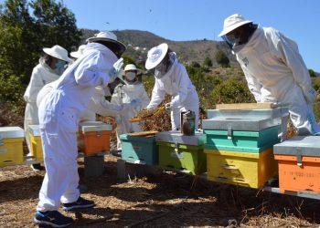 Los apicultores canarios, aliviados tras las últimas lluvias.