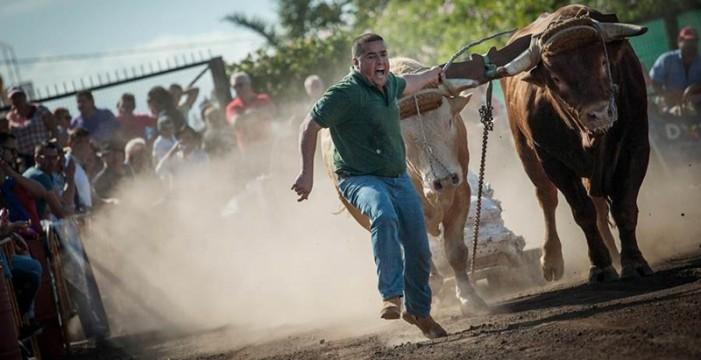 San Juan, en Tacoronte, abre la intensa temporada de diez 'jaladas'