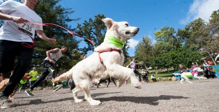 Los perros prefieren las felicitaciones de sus dueños sobre la comida