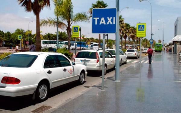 Los taxis de S/C de Tenerife podrán transportar animales domésticos