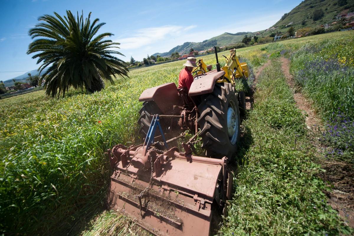 Un agricultor ara un campo de labranza en Tenerife. / FRAN PALLERO