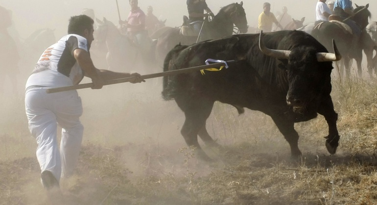 Imagen de archivo del Toro de la Vega. | REUTERS