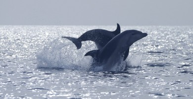 Increíble encuentro con un enorme grupo de delfines en aguas de Canarias