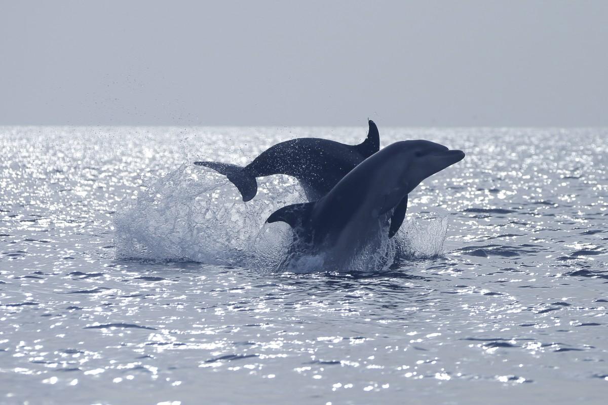 La Embajada de los Delfines lucha por la prohibición de la caza y la pesca de ballenas y delfines y el cierre de los acuarios o cualquier recinto que suponga su privación de libertad. DA