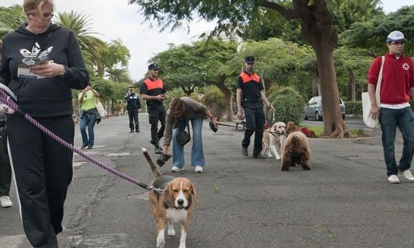 Trabajos comunitarios si no puedes pagar la multa por no recoger los excrementos de tu perro