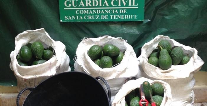 Investigan a dos personas en La Palma por robo y venta de más de 2.500 kilos de aguacates