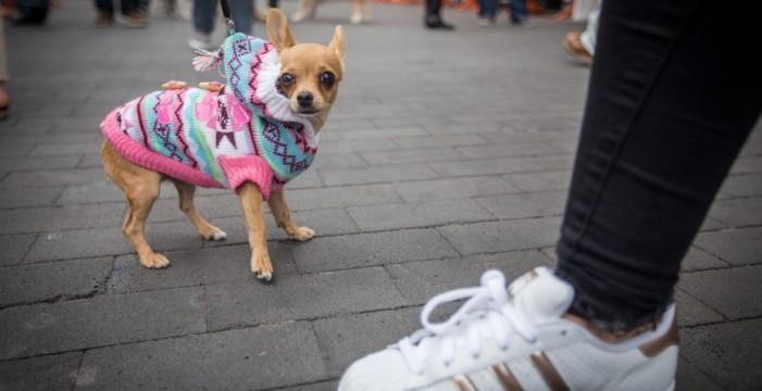 Ayuntamiento de Santa Cruz de Tenerife dice que no será obligatorio un seguro para los animales de compañía