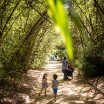 Parque de García Sanabria, en la capital tinerfeña. / ANDRÉS GUTIÉRREZ