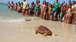 Liberada una tortuga boba en Morro Jable que fue ingresada en junio con un grave