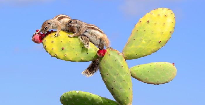 El arte de captar la belleza de la flora y fauna de las Islas