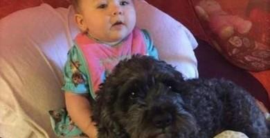 Un perro muere en un incendio por salvar a una bebé