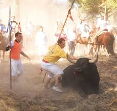 Plataforma animalista interpone una querella por robo con violencia y agresiones en el 'Toro de la Peña' de Tordesillas