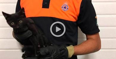 Policía Local y voluntarios de Protección Civil rescatan a un gatito atrapado en un coche