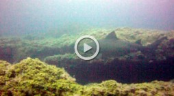 Avistan un tiburón solrayo en aguas de El Hierro