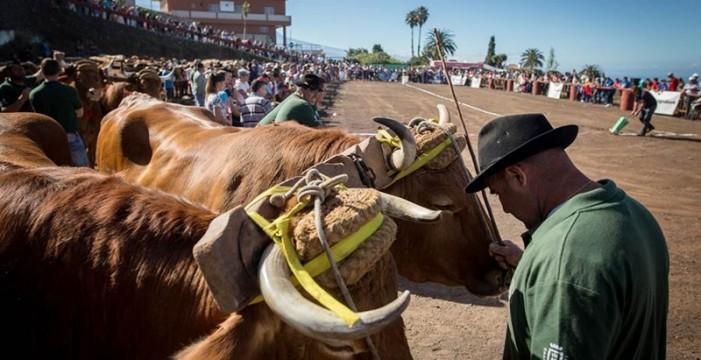 Doble jornada de competición hoy en La Laguna y el 5 en La Matanza