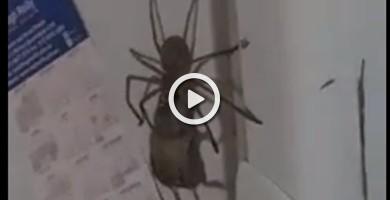 La lucha entre una araña y un ratón que suma más de 12 millones de reproducciones