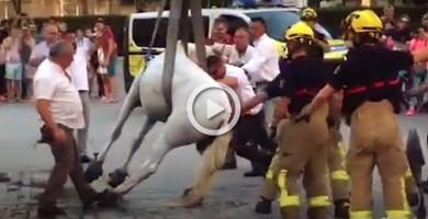PACMA denuncia el maltrato animal que sufren los caballos en los carruajes de Sevilla