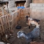 Investigan a una persona en La Palma por dejar morir a animales de hambre | FOTO: GUARDIA CIVIL