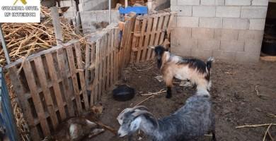 Lo investigan en La Palma por dejar morir de hambre a animales
