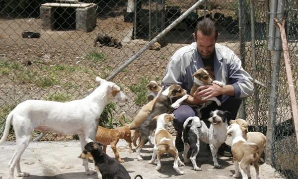 Unos 60 veterinarios atienden a los animales heridos en el incendio de Gran Canaria