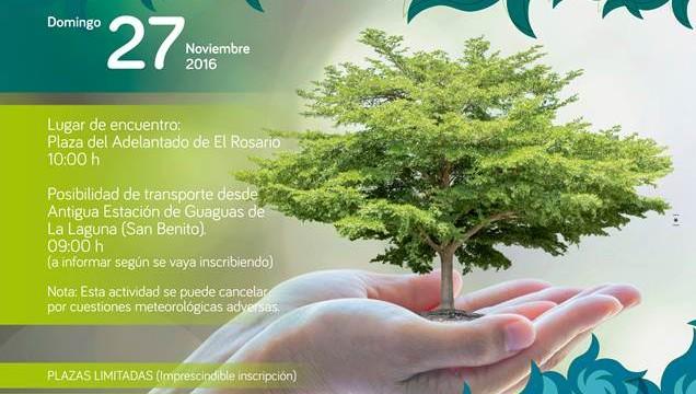 El Festival Keroxen compensará su huella de carbono plantando 300 árboles