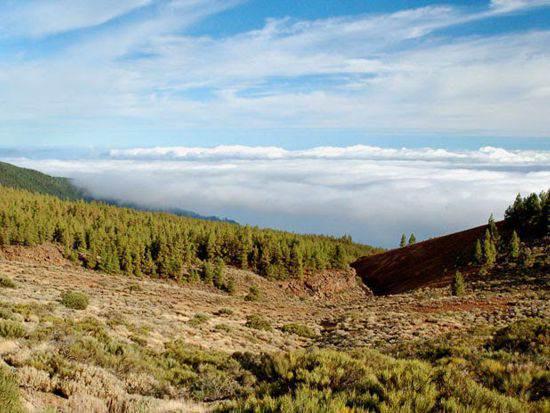 Hoya de La Matanza (San Juan de la Rambla). DA