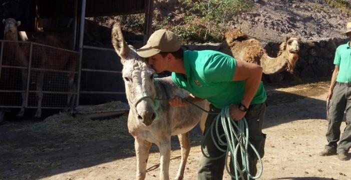 El zoo Oasis Park Fuerteventura rescata un burro salvaje en Jandía