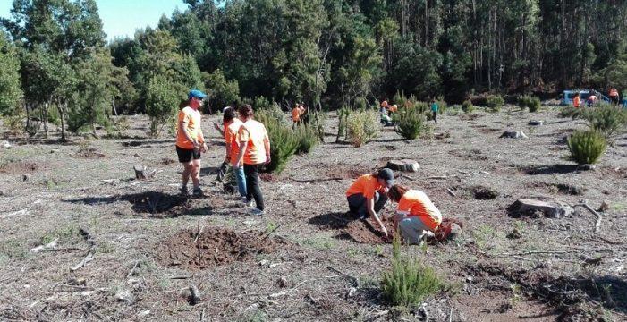 """Tenerife Walking Festival cumple su compromiso """"huella cero"""" con la plantación de especies de monteverde"""