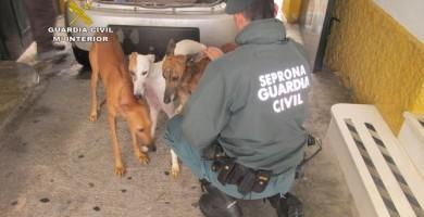 Investigan a una persona por maltrato animal tras arrojar galgos en un pozo de Osuna
