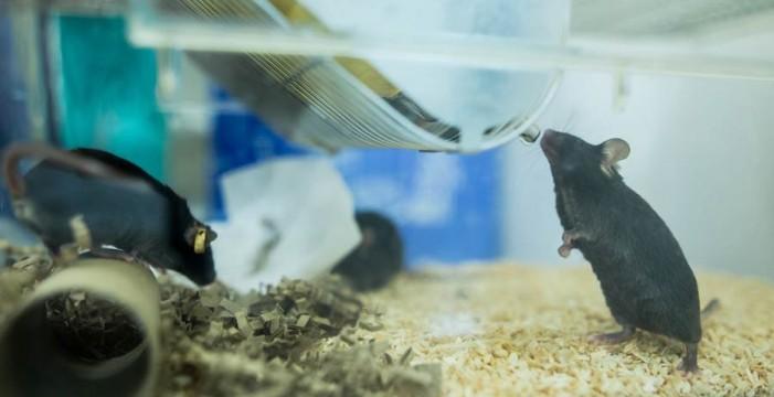 El veto de las aerolíneas a  los animales de laboratorio demora otra investigación