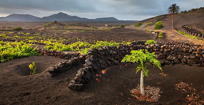 'Wine Enthusiast' sitúa Canarias entre los 10 destinos vinícolas del mundo de 2017