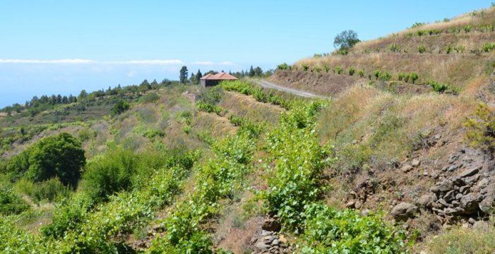 La D.O. de Vinos La Palma celebra su XXV aniversario