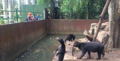 Piden solución al estado de estos osos esqueléticos de un zoo de Indonesia