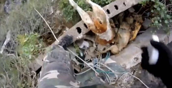 El terrible vídeo de la masacre canina en la finca de Arona