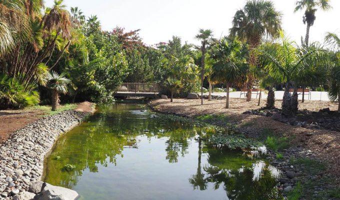 El Palmetum: un oasis para las especies en peligro