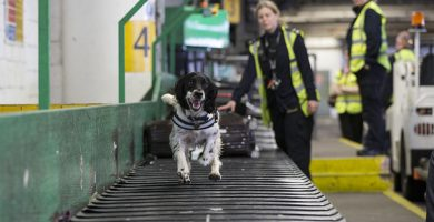 Así fue la venganza de un pasajero por no recoger los excrementos de su perro