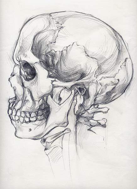 Mireia Tramunt hizo el dibujo de una calavera para su clase de anatomía en su primer año de carrera