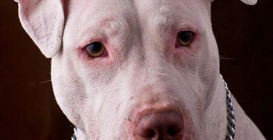 Fallece un hombre atacado por cinco perros de raza peligrosa de su vecino