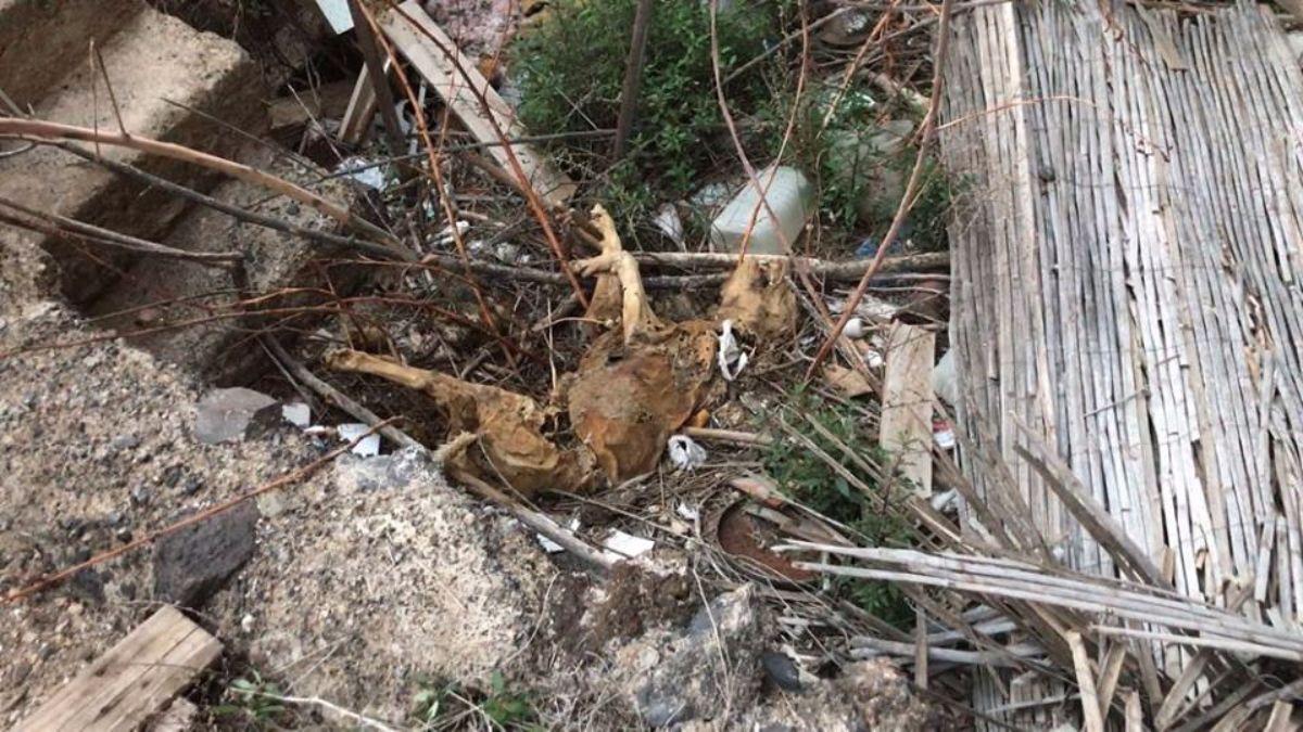 Uno de los cadáveres de perro hallados en la finca abandonada de Arona | Markus Baier