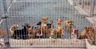 Prohibido por ley cortarle el rabo a los perros en todo el país, a pesar del PP