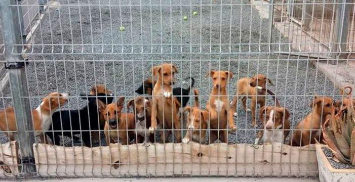 En Arona se recogen mensualmente 15 perros abandonados