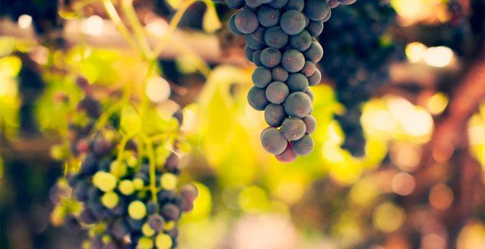 La CNN en Estados Unidos destaca los vinos de Tenerife