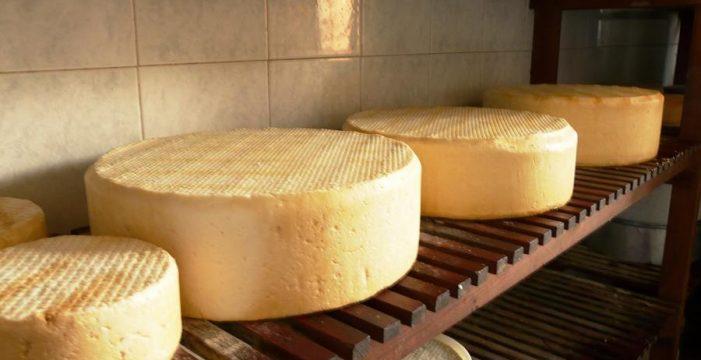 Crece la producción de queso palmero con Denominación de Origen